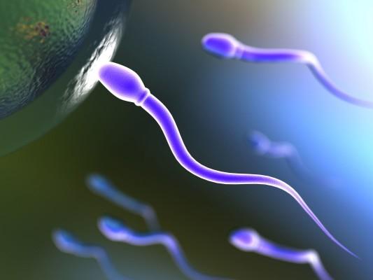 espermato